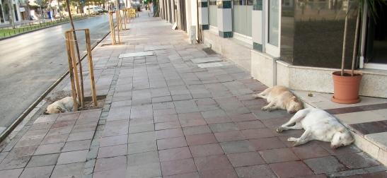 Stray dogs, Izmir