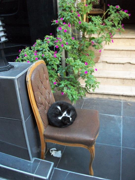 Istanbul cats, Cukurcuma, Turkey