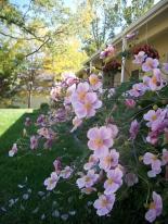 flower photos, Colorado