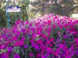 garden, Colorado, flowers