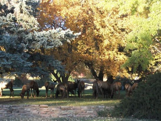 elk, Colorado, fall photographs