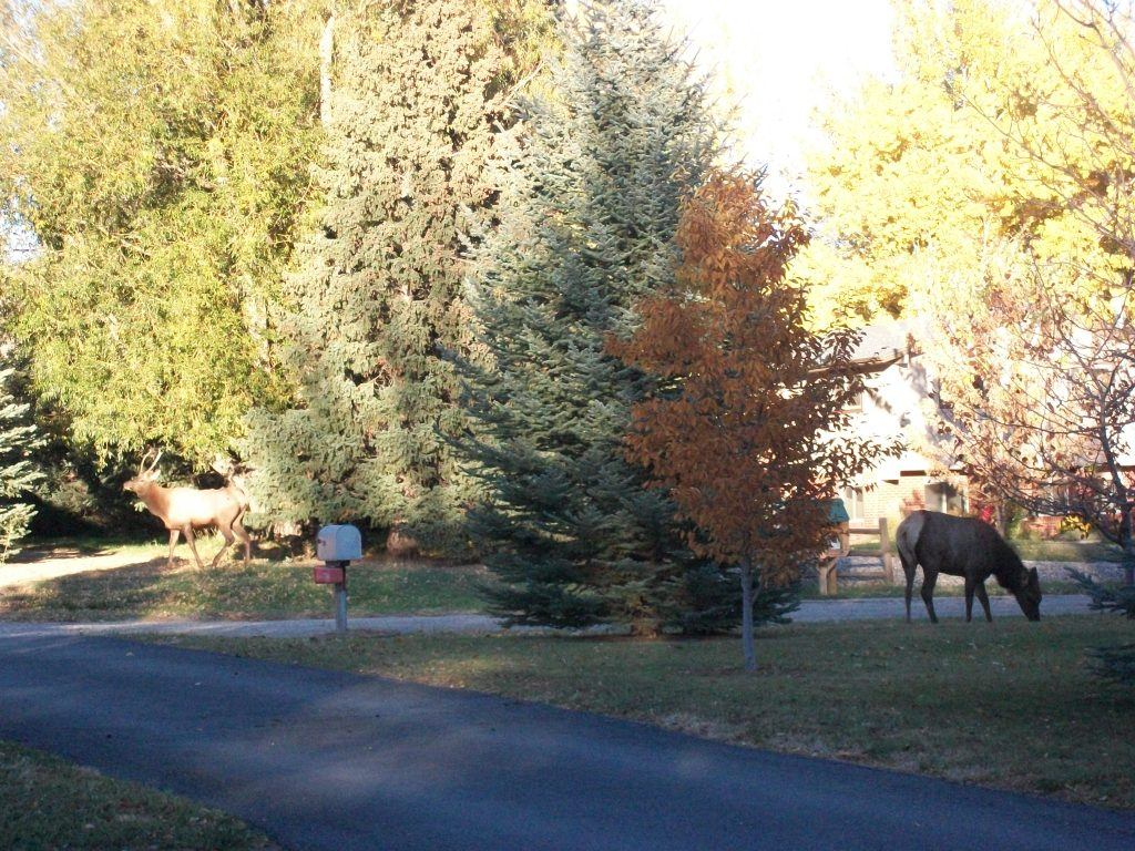 elk, Colorado, fall photographs