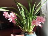 orchids, Colorado