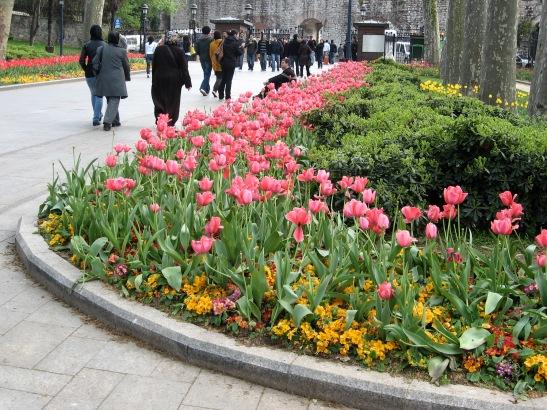 Tophane, Istanbul, Turkey, tulips