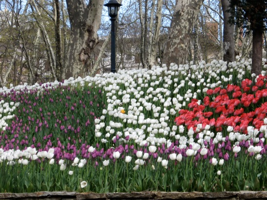 tophane, Istanbul. Turkey, tulips, spring
