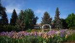 gardens in Colorado, Colorado flowers, gardens with iris