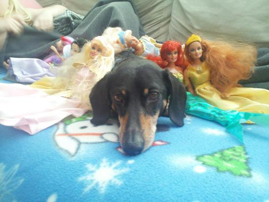 dachsund, dogs with dolls