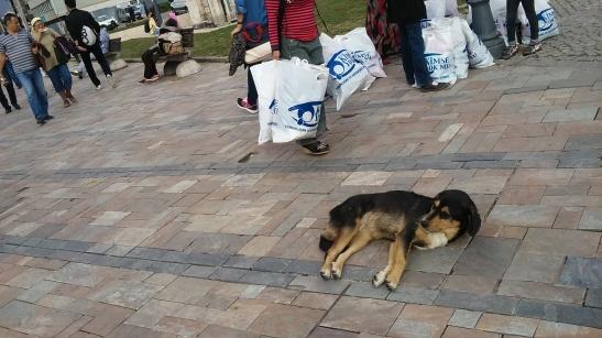 dogs of izmir, stray dogs izmir